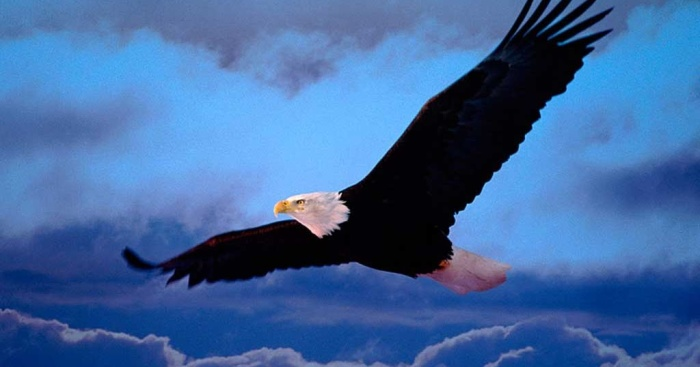 o voo da aguia